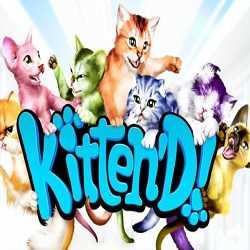 Kitten d